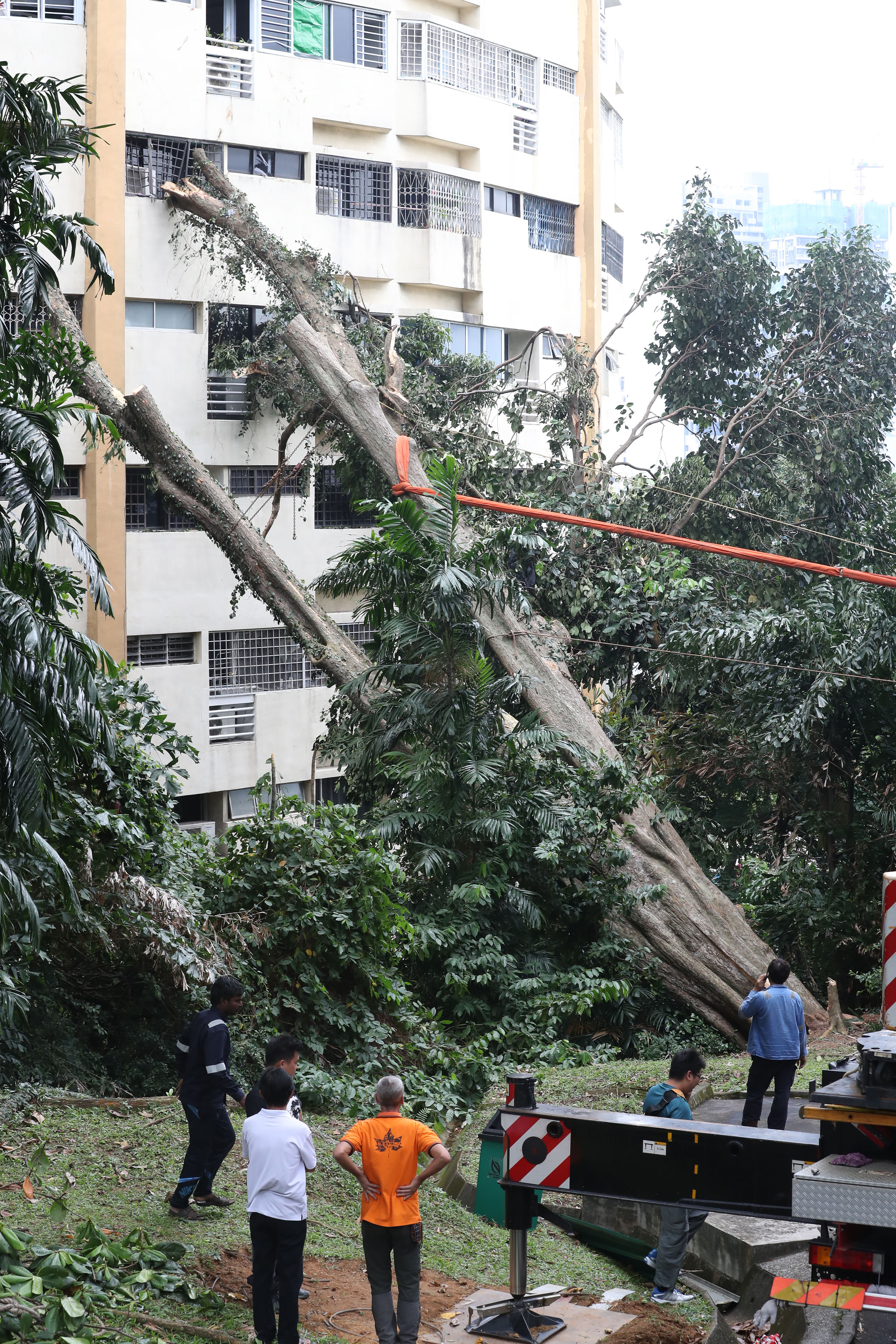 Heritage Tree Falls On 40 Year Old Pearl Bank Apartments Math Wallpaper Golden Find Free HD for Desktop [pastnedes.tk]