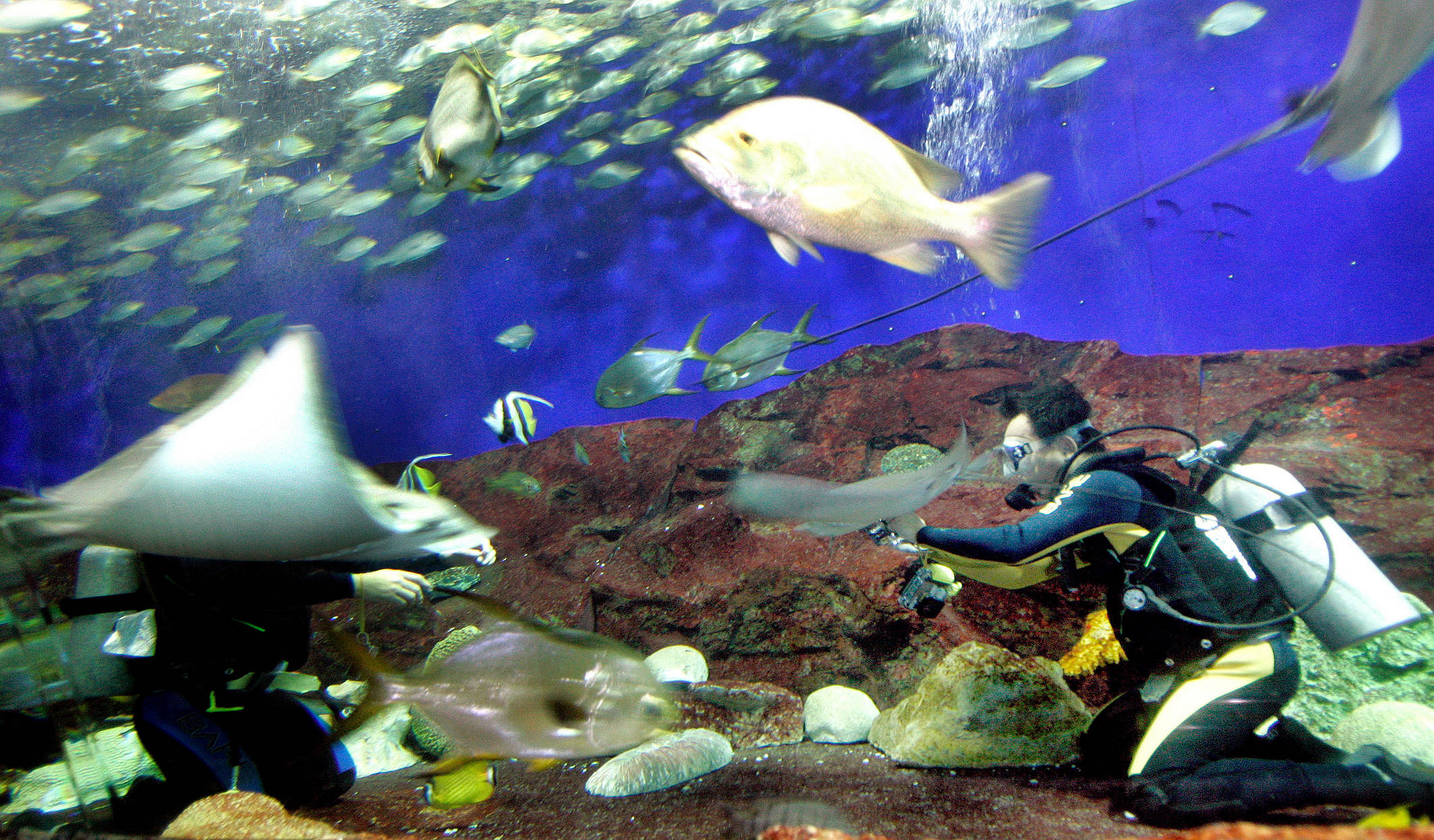 Underwater World Singapore to close on June 26 with lease ending