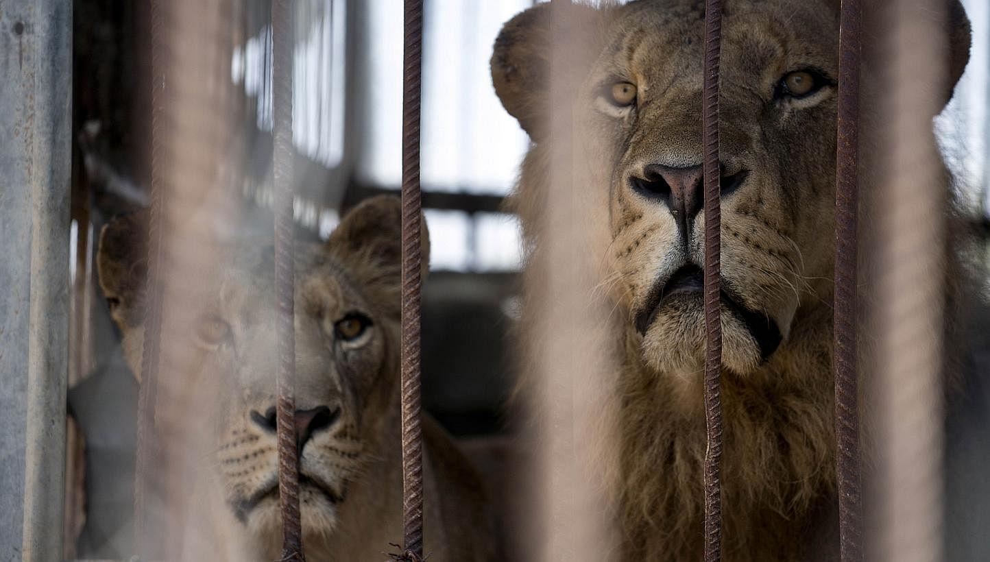 Heartbreaking photos of animals abandoned to die in the zoo in the Gaza Strip