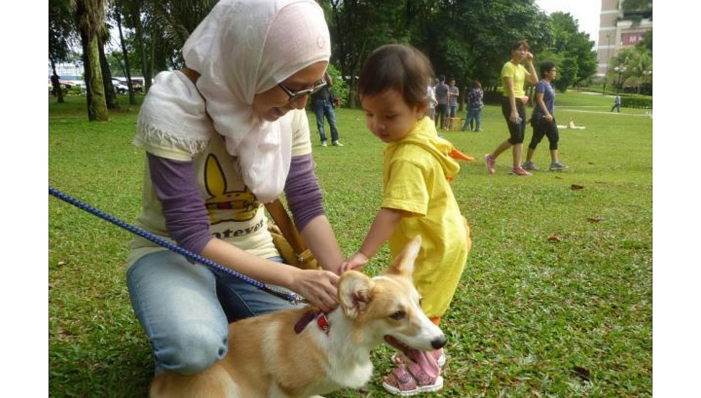 Malaysia S I Want To Touch A Dog Event A Big Hit With Muslims Se Asia News Top Stories The Straits Times