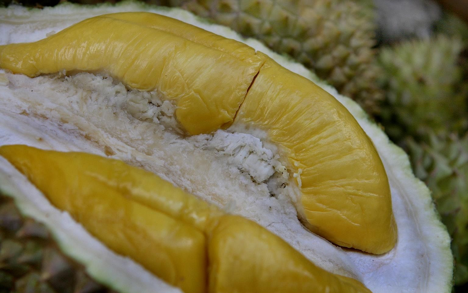 Hail The King Of Fruit 10 Types Of Durians From Malaysia Singapore News Top Stories The Straits Times