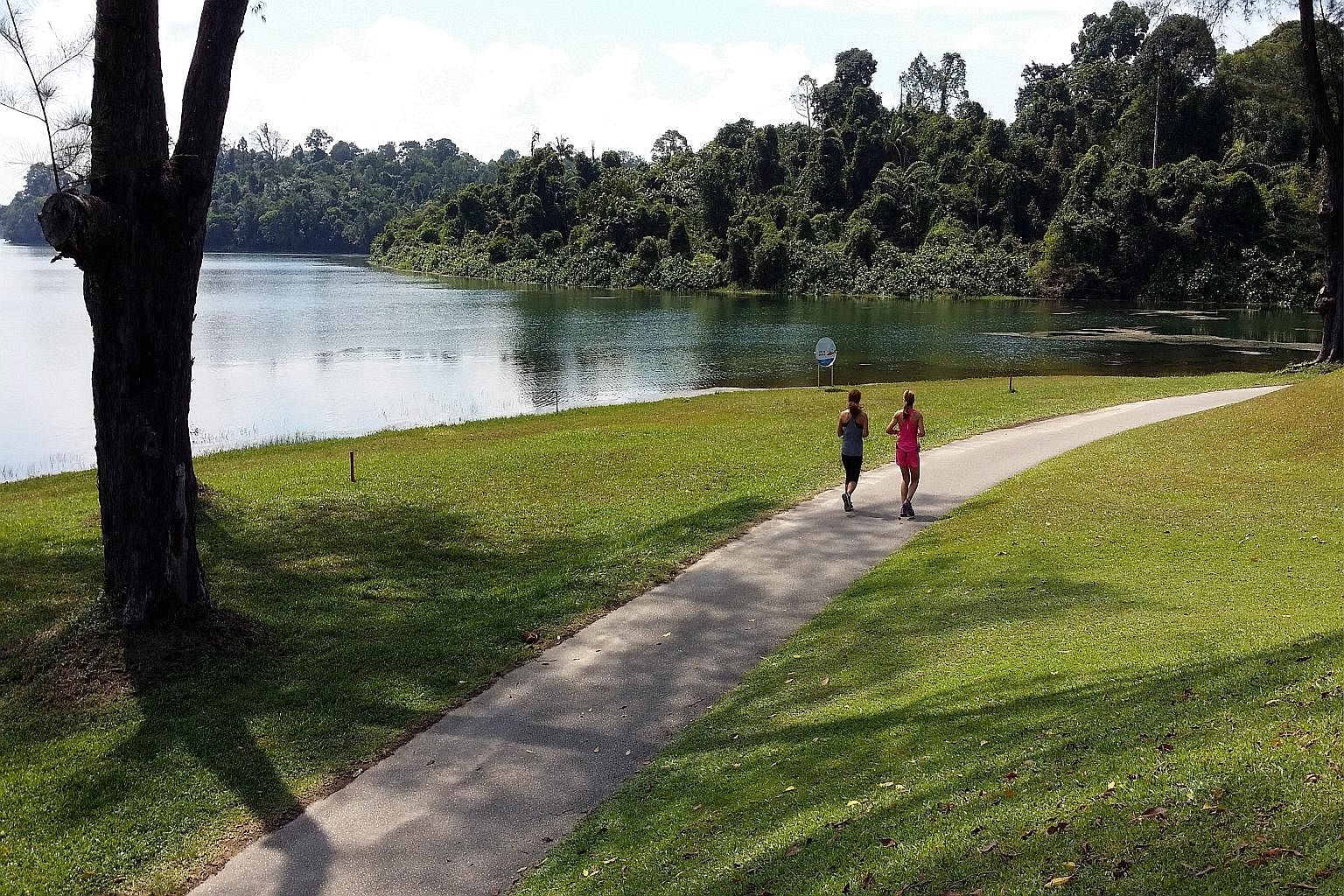 The ability of nature, in areas like MacRitchie Reservoir (above), to improve mental health and well-being is well-documented.