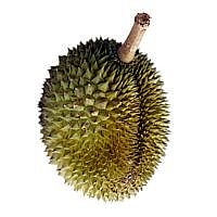 ST 20131117 DURIAN 8 3918937m
