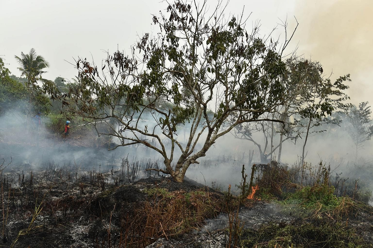 A firefighter extinguishing a blaze on peatland in Central Kalimantan at the height of the crisis this year.