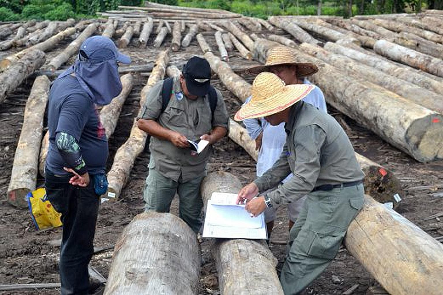 Personnel from the Malaysian Anti-Corruption Commission, police, state forestry department and Inland Revenue Board conducting checks at sawmills and log ponds across Sarawak in May last year.