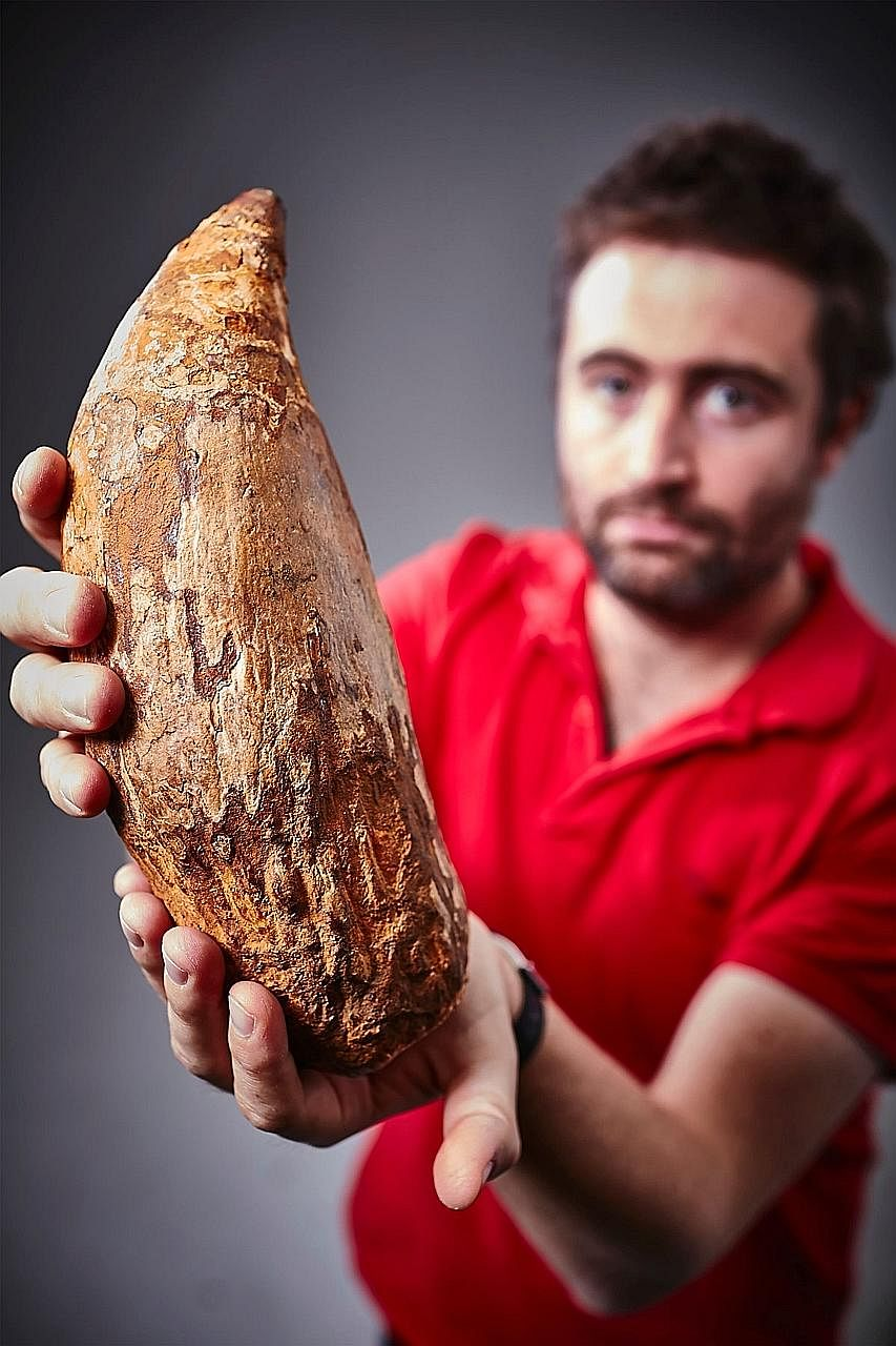 Australian palaeontologist Erich Fitzgerald holding a five-million- year-old tooth from a killer sperm whale. The 30cm fossilised tooth, larger than that of a Tyrannosaurus rex, was discovered recently on a beach near Melbourne and provides the first
