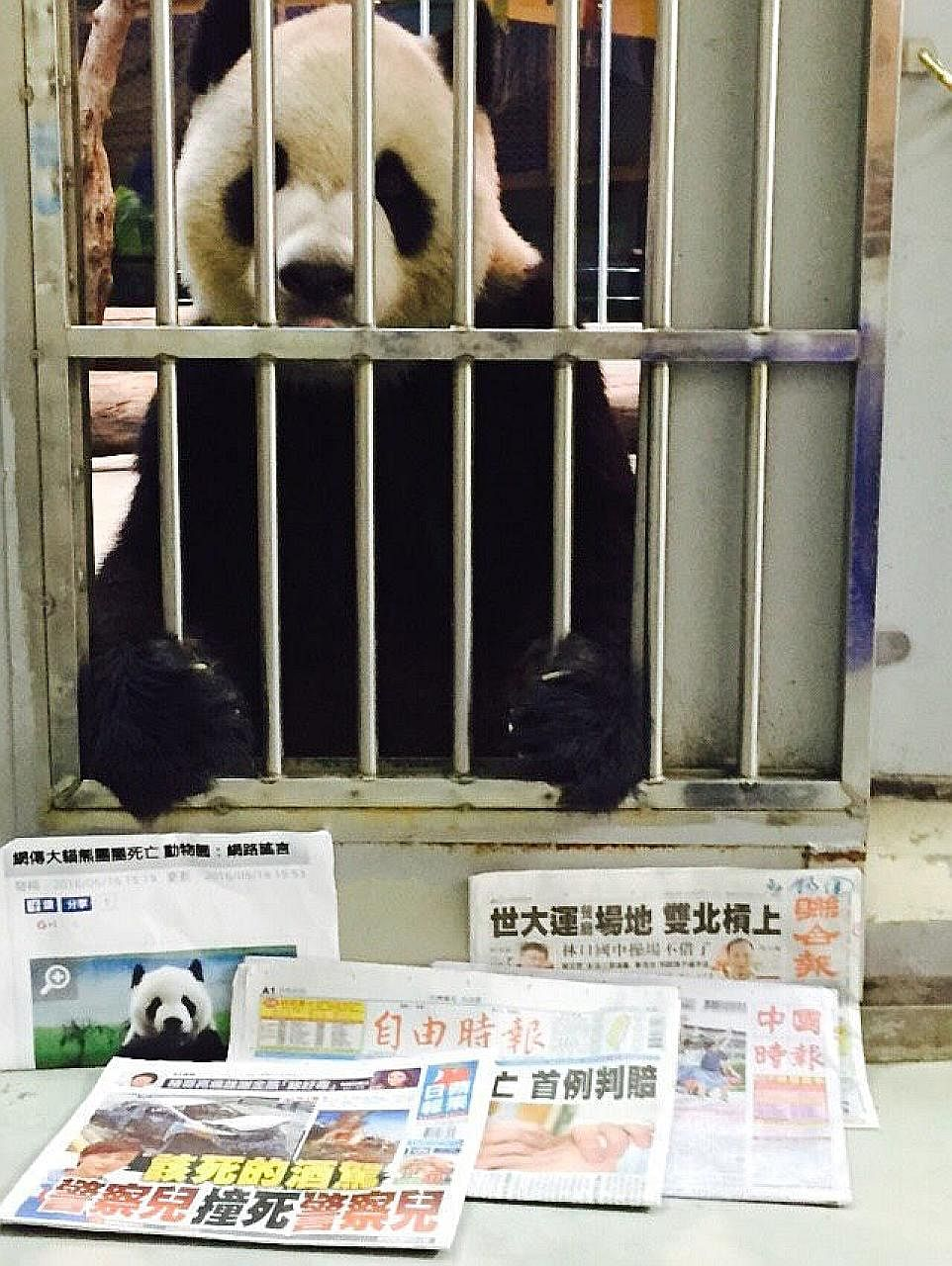 Tuan Tuan, Taipei Zoo's male panda, was mistaken to have died.