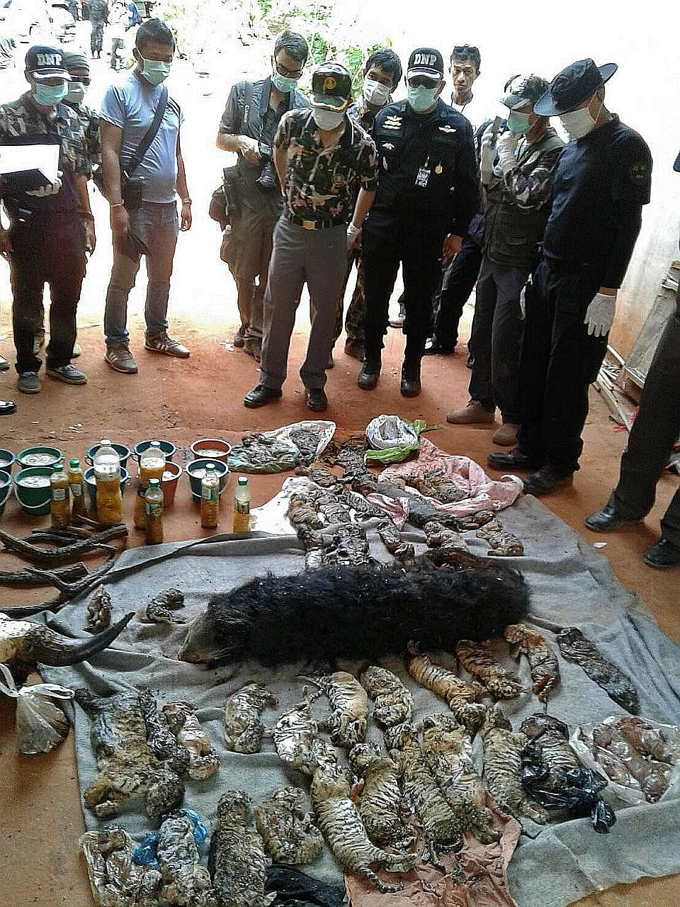 Thai Department of National Parks officers with carcasses of tiger cubs and bears. Glass jars containing baby tigers and tiger parts were found in the temple, reinforcing suspicions that it was making folk medicine.
