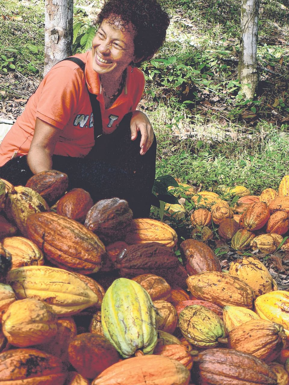 ForestFinance's cocoa forests in Panama. The firm invites investors to buy shares (that is, trees) in forests that are ethically and sustainably managed.