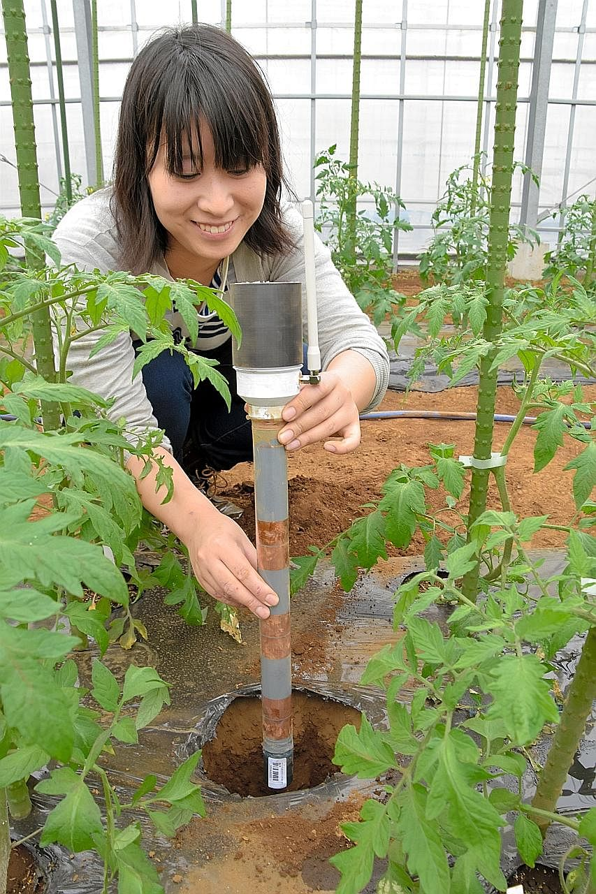 A SenSprout team member checks a water sensor at a farm set up by the University of Tokyo in Nishitokyo city.
