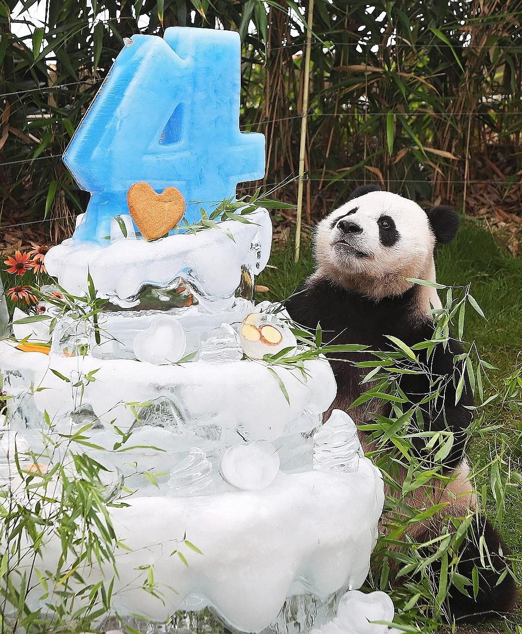 A giant ice cake to celebrate giant panda Le Bao's upcoming birthday at South Korea's Everland amusement park in Yongin, Gyeonggi province, yesterday. The male panda, part of a pair on loan from China, arrived in South Korea in March. Le Bao turns fo