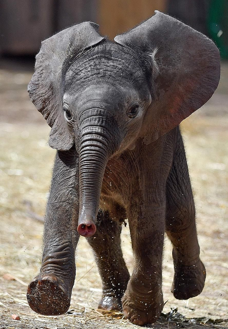 The Times reported last week on a study that revealed how the African elephant population is in drastic decline, having shrunk about 30 per cent from 2007 to 2014.