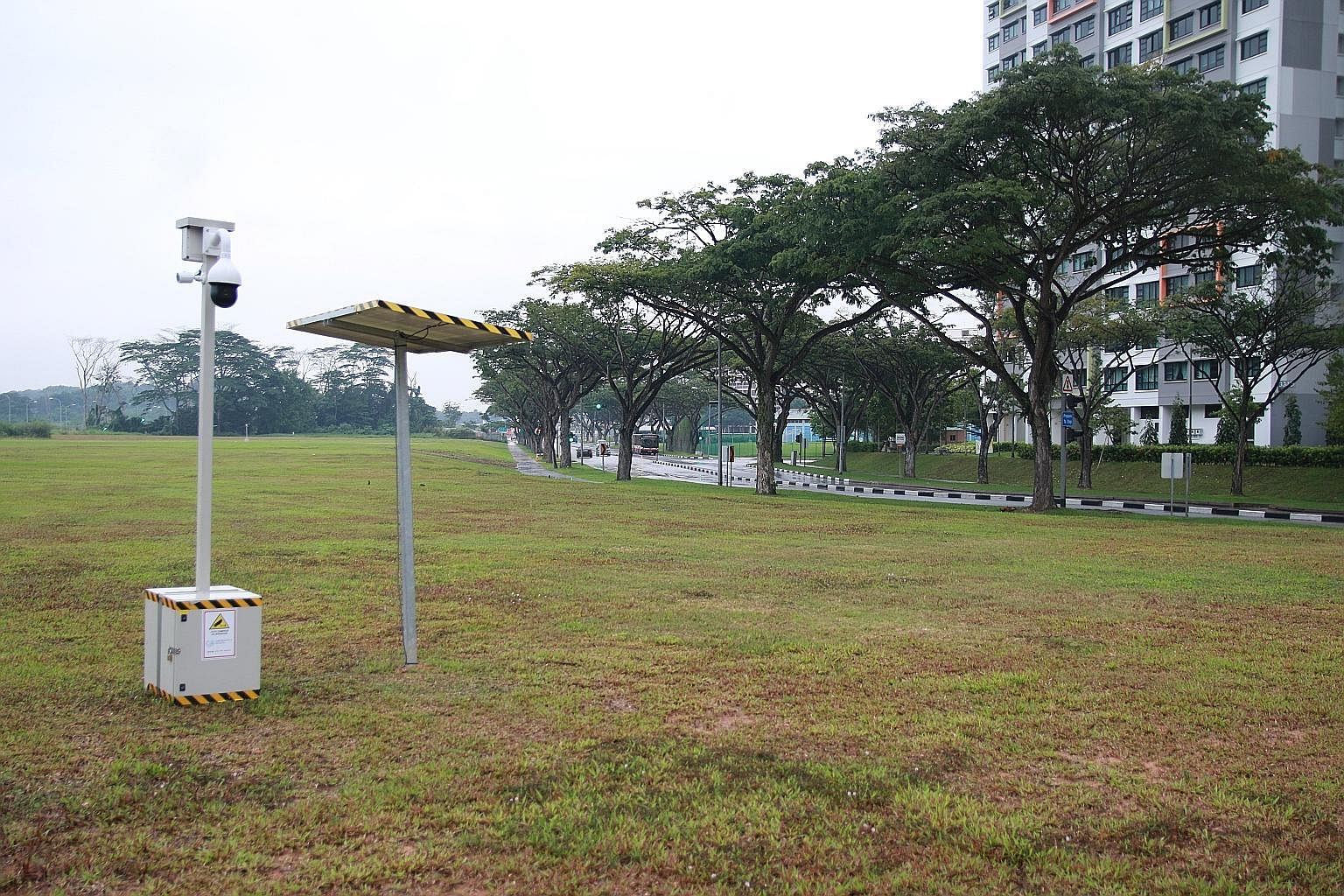 Ms Janet Sum, founder of Facebook group Yishun 326 Tabby Cat, said she knows of five adult dogs and two puppies that frequent the open field between Yishun Avenues 6 and 8.