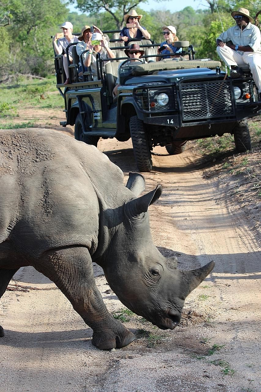 Conventional methods to ward off poachers include tranquillising the rhino so that tracking sensors can be inserted into its horn and under its skin, and removing its horn completely. A patrol car driving by a fence which separates a private game res