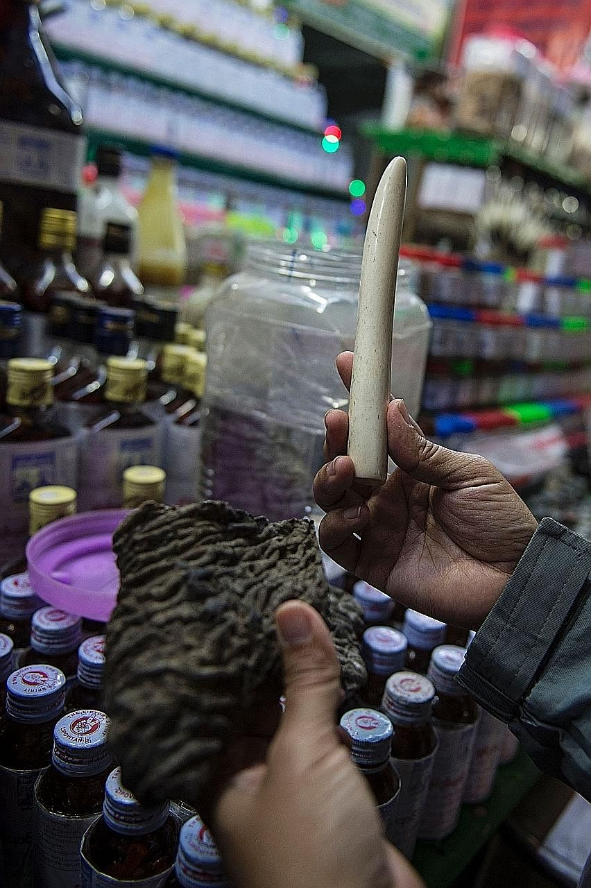 Dried elephant skin and an ivory tusk for sale at a traditional medicine shop at the Golden Rock pagoda.