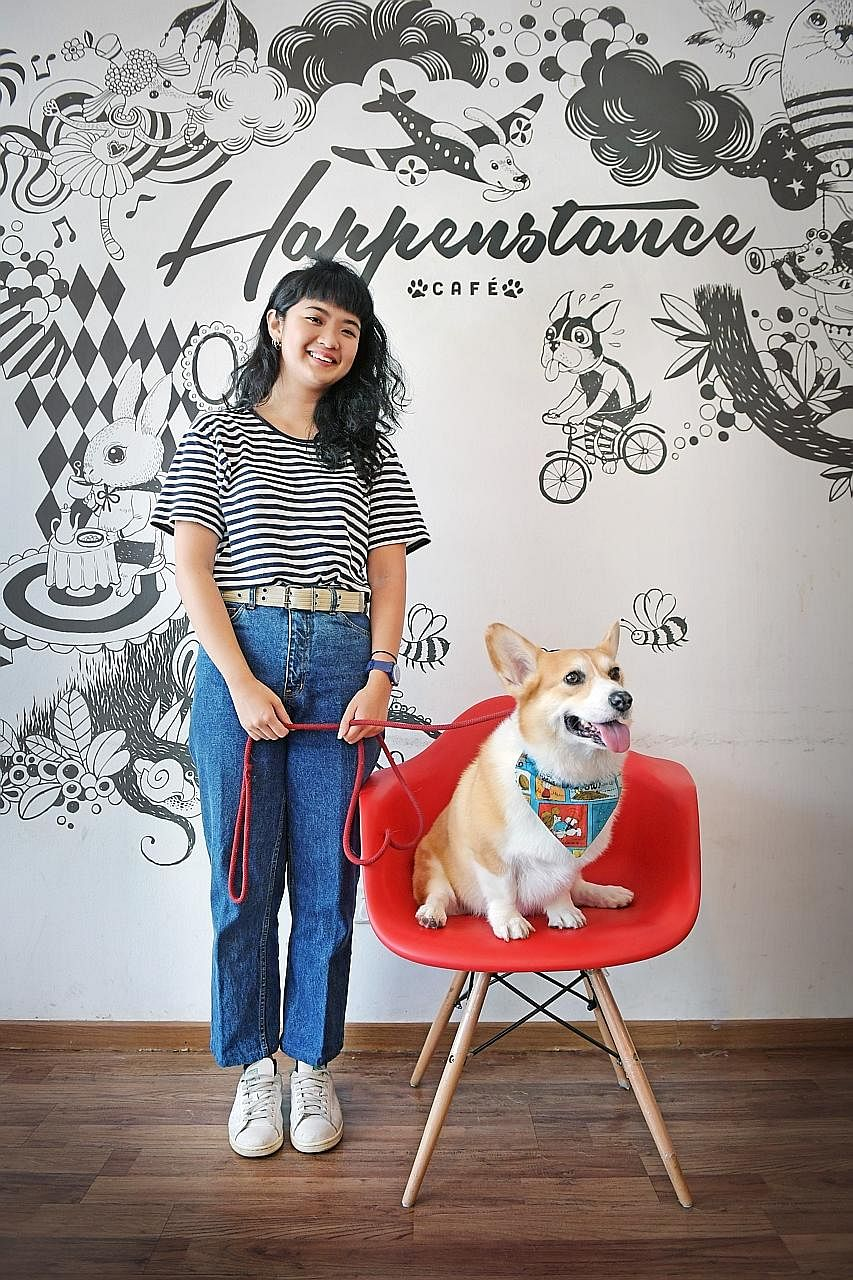 Ms Can Zhi Ying regularly dresses Muffin up in props she finds at Japanese budget store Daiso. Ms Seet Mingli started her pet's Instagram account in 2013 and posted four to five photos a week. Ms Celine Tan started the Instagram account in 2010 for h