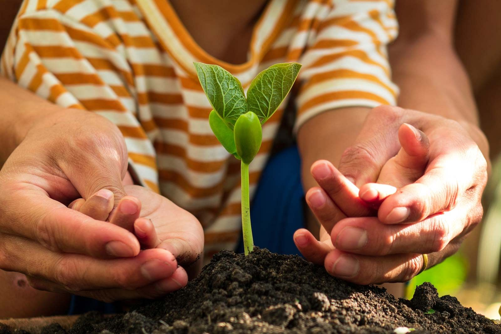 People's Association Parent Child course - Grow your own organic herbs and spices