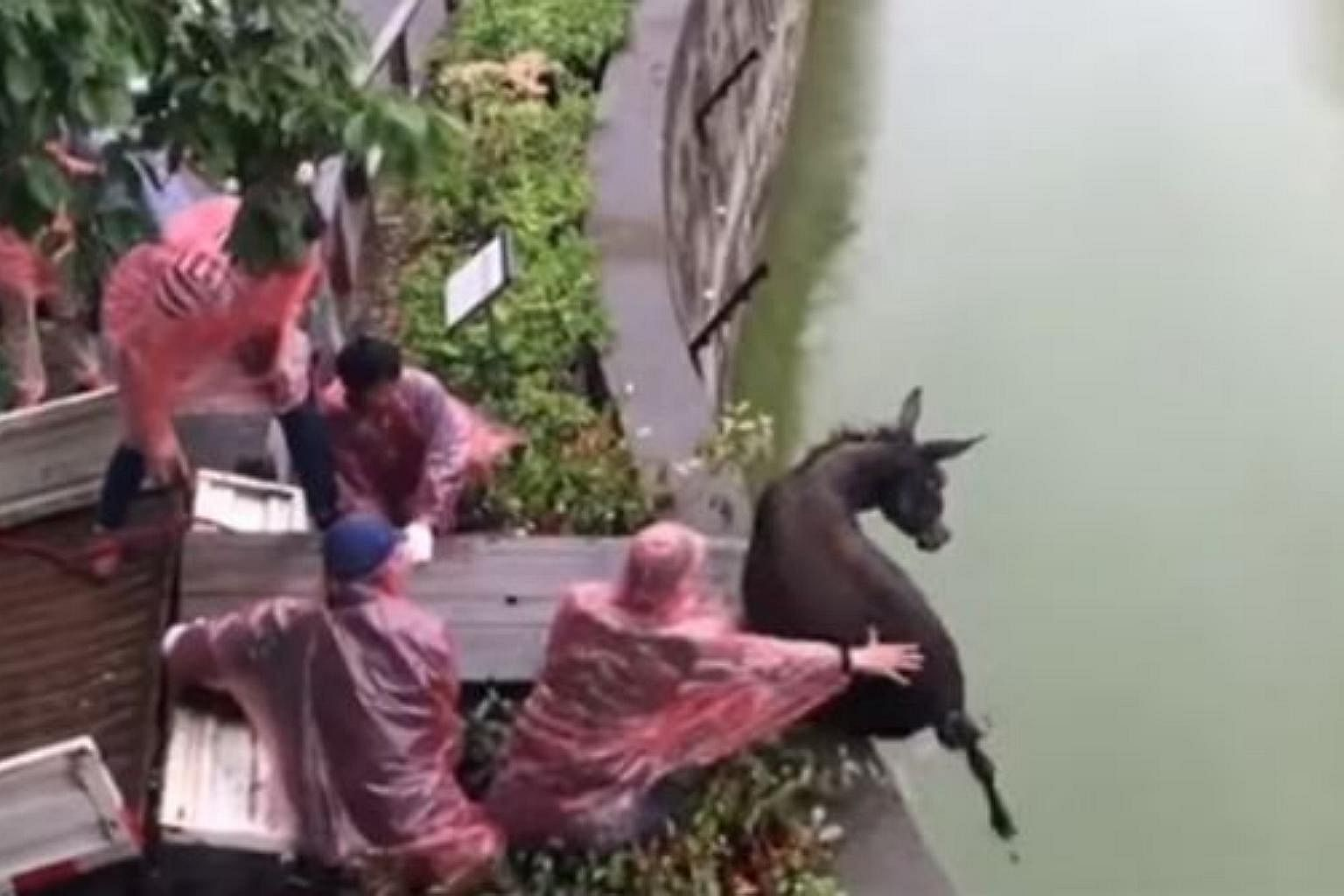 China zoo visitors shocked by live donkey fed to tigers