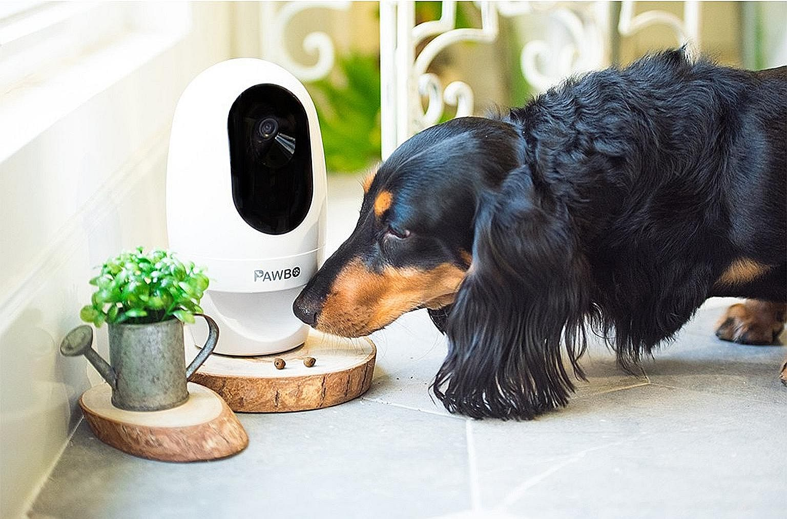 If you see that your pet has been a good boy, tap a button on your smartphone and the Pawbo+ smart pet camera will dispense a reward.