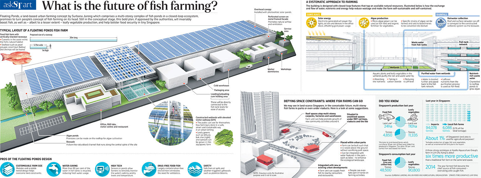 What is the future of fish farming?, Singapore News & Top Stories ...