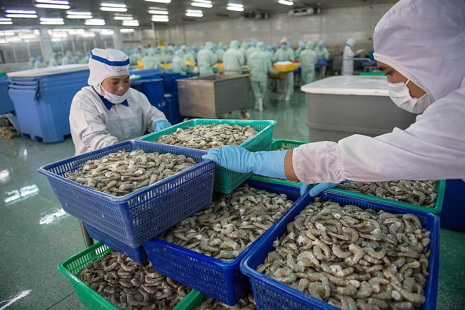Vietnamese workers moving baskets of shrimp at the Khanh Sung Seafood Company in the My Xuyen district in southern Vietnam. The fishery sector was among the industries that helped the country's economy expand 7.46 per cent from July to September.