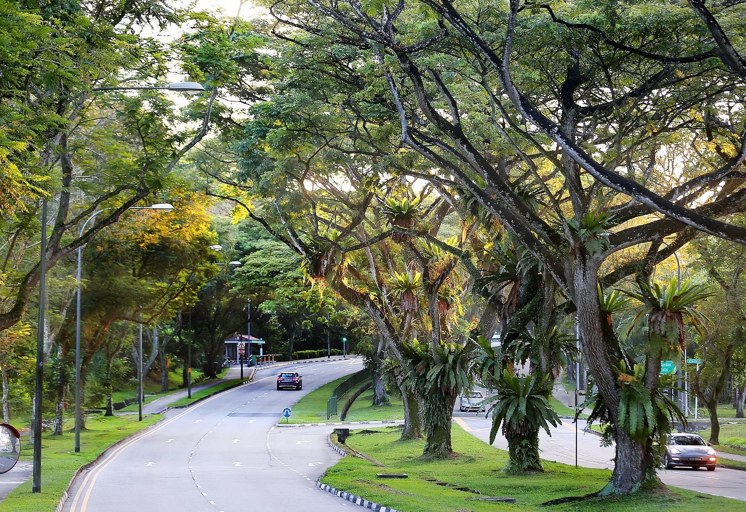 """The writer calls a 1 1/2km stretch of Yio Chu Kang Road his """"refuge"""". This green belt is where he usually goes for his Sunday walks, to get away from life's """"pesky little irritations"""". Driving shows you nothing, he says. Instead, it is only when one"""