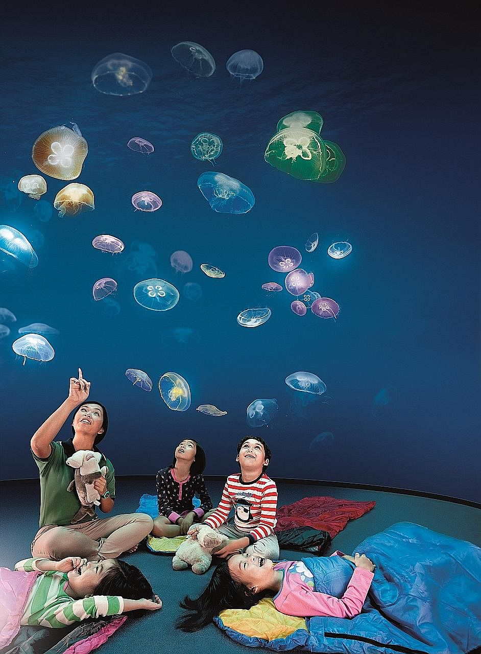 Resorts World Sentosa's Ocean Dreams package lets a family of four enjoy an overnight stay at the S.E.A. Aquarium, including the rare opportunity to feed manta rays and attend talks on ocean conservation, as well as breakfast the following morning.