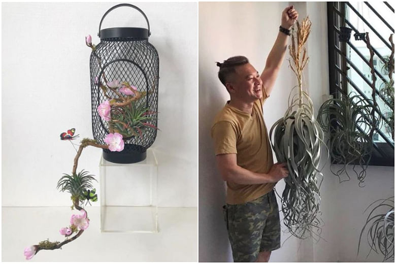 This Singaporean Air Plant Collector Makes Amazing Art Displays That Don T Look Like Plants At All Singapore News Top Stories The Straits Times