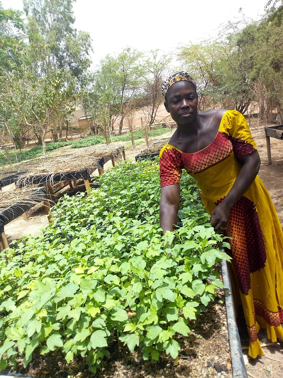 The farming initiative is benefiting women, helping them climb out of poverty, according to team leader Aminata Sinare.