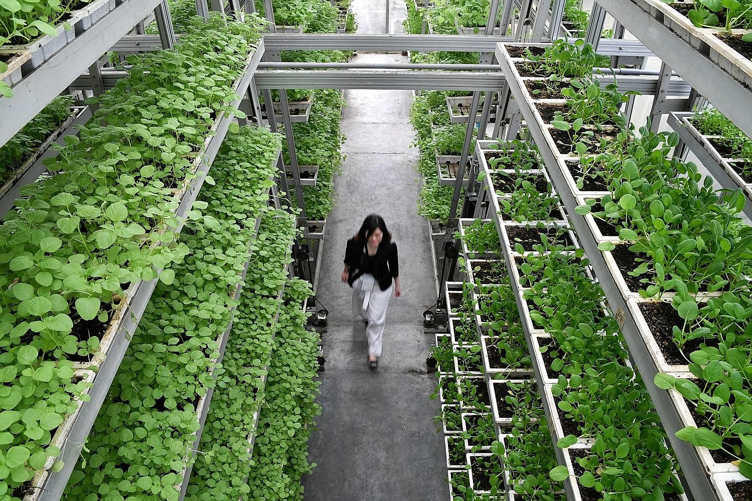 Singapore's agri-food industry received a boost when Sky Greens, an urban farm in Lim Chu Kang, received certification under the world's first national standard for organic vegetables grown in urban environments. The Singapore Standard 632 for organi