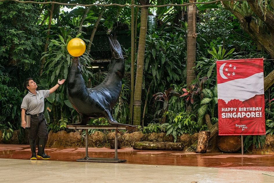 8 Uniquely Singapore activities with wildlife that you will