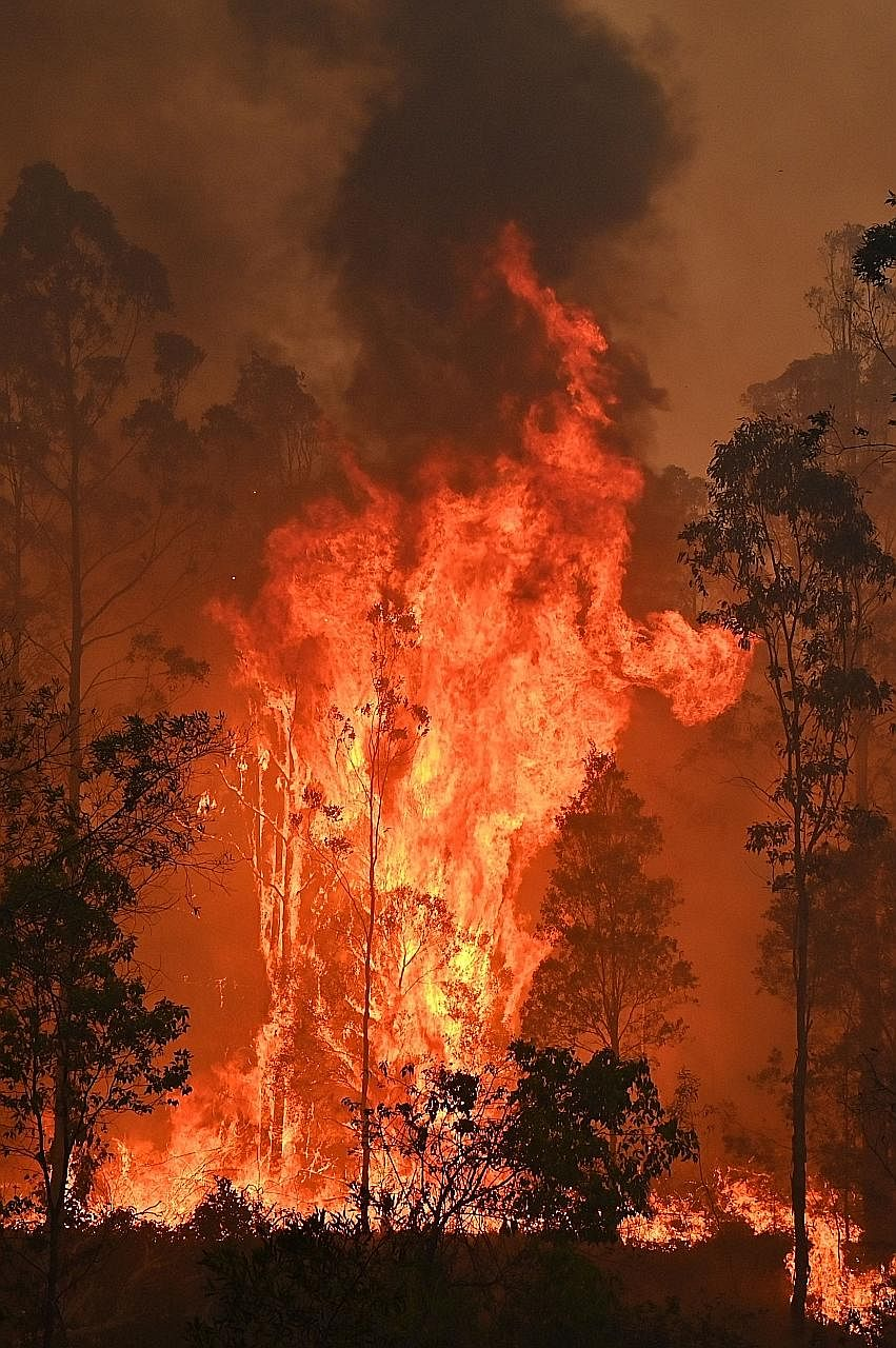 A fire raging yesterday in Bobin, a town 350km north of Sydney. As many as 81 fires - 36 of them uncontained - were burning across the state of New South Wales yesterday afternoon.