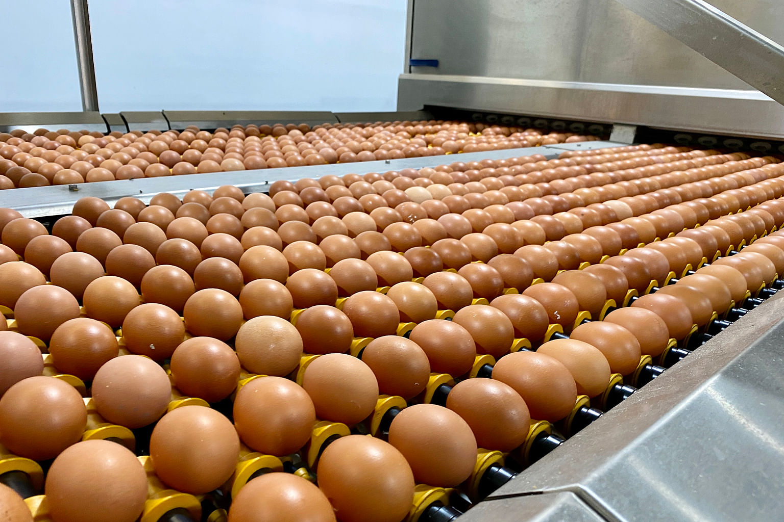 Chew's Agriculture will boost output at its new farm in Neo Tiew Road, which has the capacity to produce at least 800,000 eggs a day.