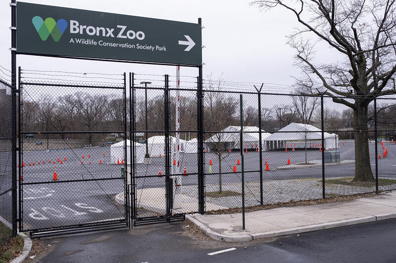 Tiger At New York S Bronx Zoo Tests Positive For Coronavirus United States News Top Stories The Straits Times