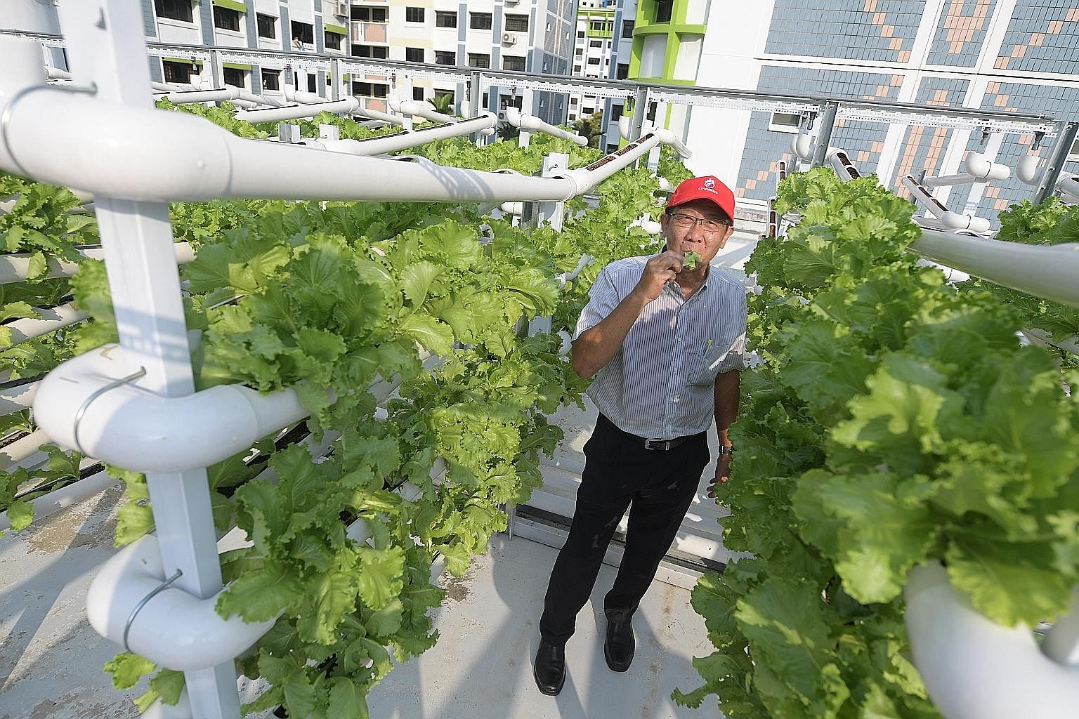 """Mr Teo Hwa Kok, chairman of Citiponics, at the company's rooftop farm in Jurong. Such urban farms will help Singapore to work towards its """"30 by 30"""" goal of producing 30 per cent of the country's nutritional needs locally by 2030."""