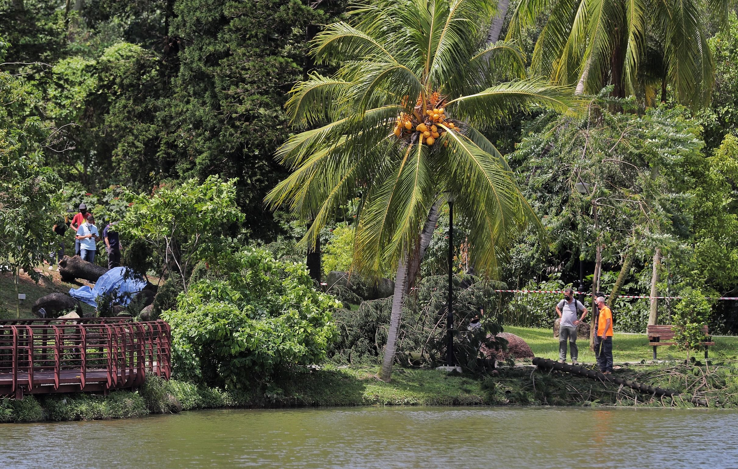 Singapore woman killed by falling tree in Marsiling Park was wearing noise-cancelling earbuds
