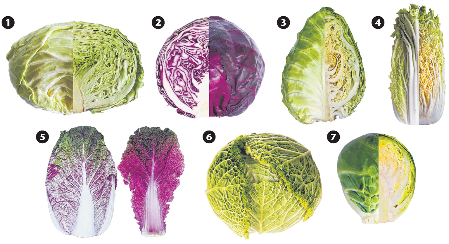 Cabbages Food News Top Stories The Straits Times