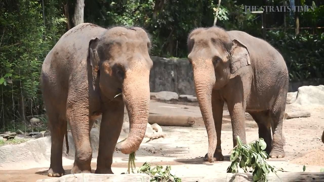 Elephants no longer made to perform at Singapore Zoo