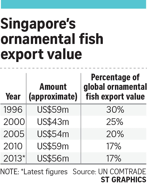 Major farms switching to food fish, Singapore News & Top