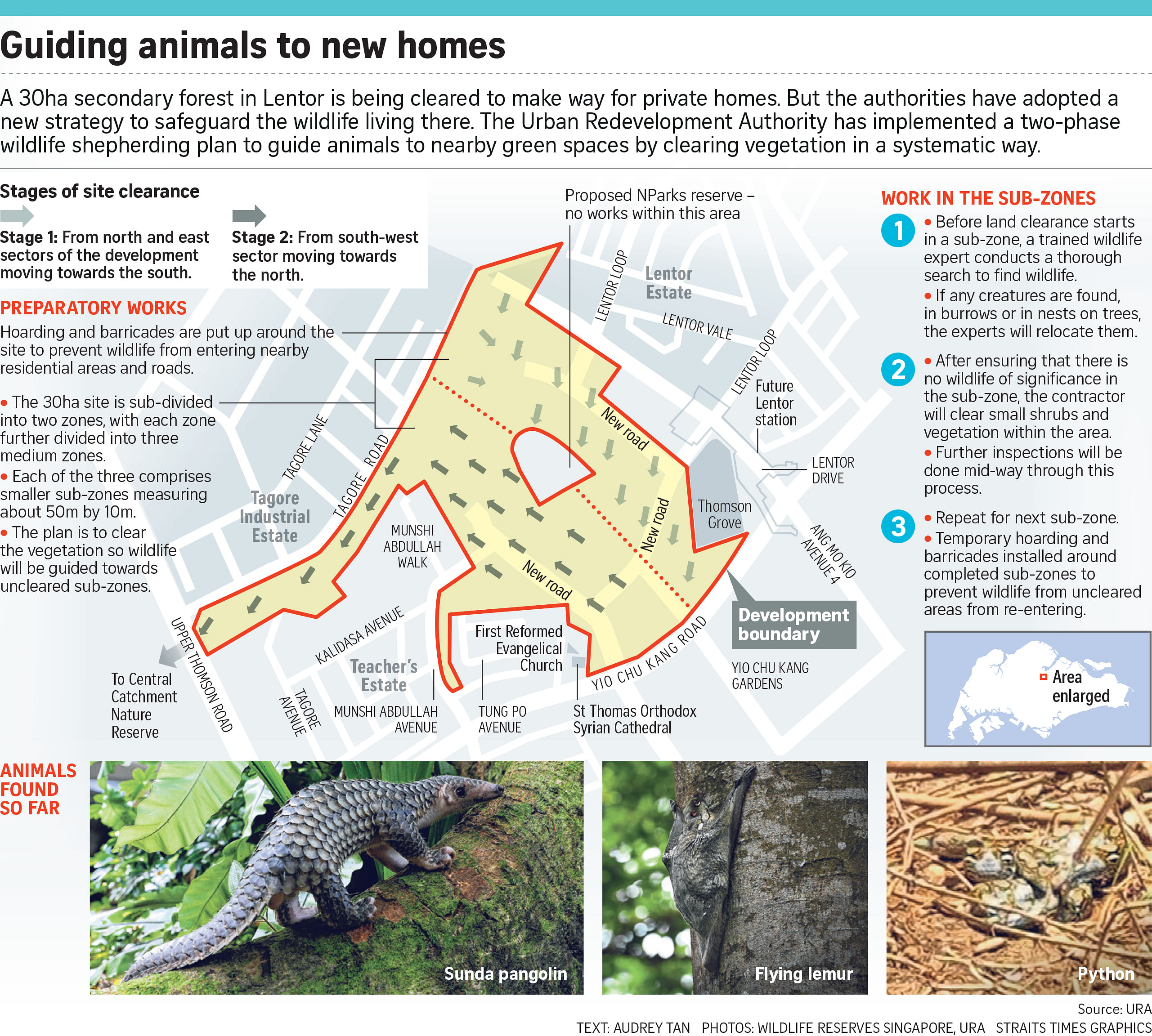 plan to save wildlife at lentor site marked for housing