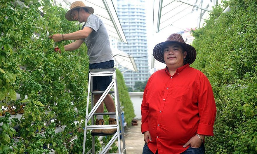 Mr Allan Lim (in red) co-founded founded Comcrop, which is at youth hub *Scape in Orchard Link and supplies herbs to hotels and eateries nearby. --ST PHOTO: TIFFANY GOH