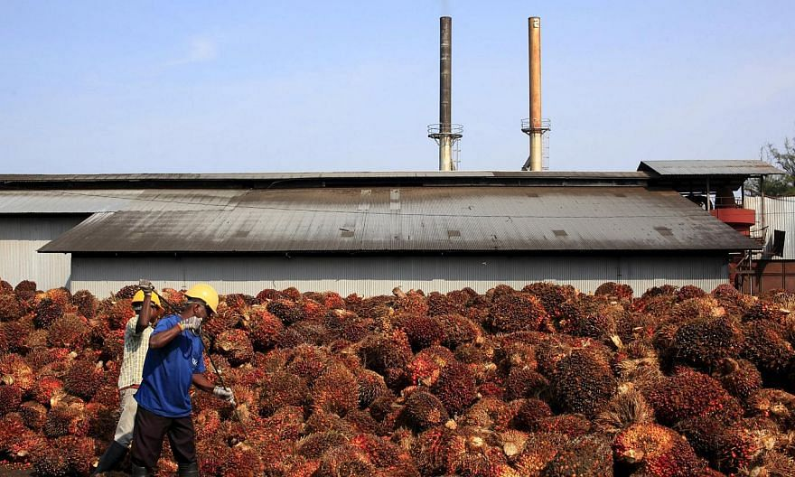 Workers collect palm oil fruits inside a palm oil factory in Sepang, outside Kuala Lumpur, in this February 18, 2014 file photo. -- PHOTO: REUTERS