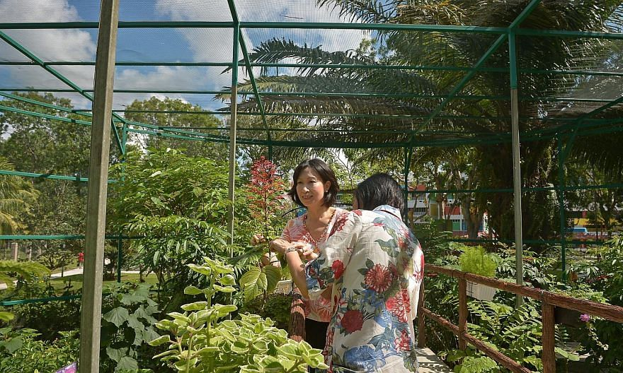 MP Irene Ng (left) together with Ms Phyllis Tng, 58, (right) a volunteer of the Tampines Changkat Butterfly Interest Group at the Tampines Changkat Butterfly Garden located at the at Tampines Street 11.-- ST PHOTO:KUA CHEE SIONG
