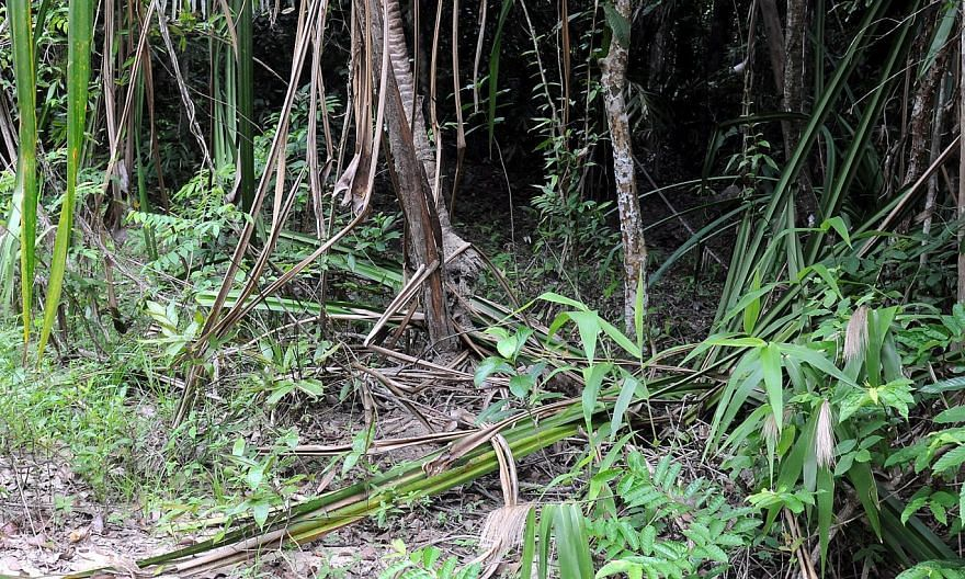 The view of the jungle trail which leads to the mass graves found near the border town of Padang Besar in Perlis state. -- PHOTO: THE STAR/ASIA NEWS NETWORK