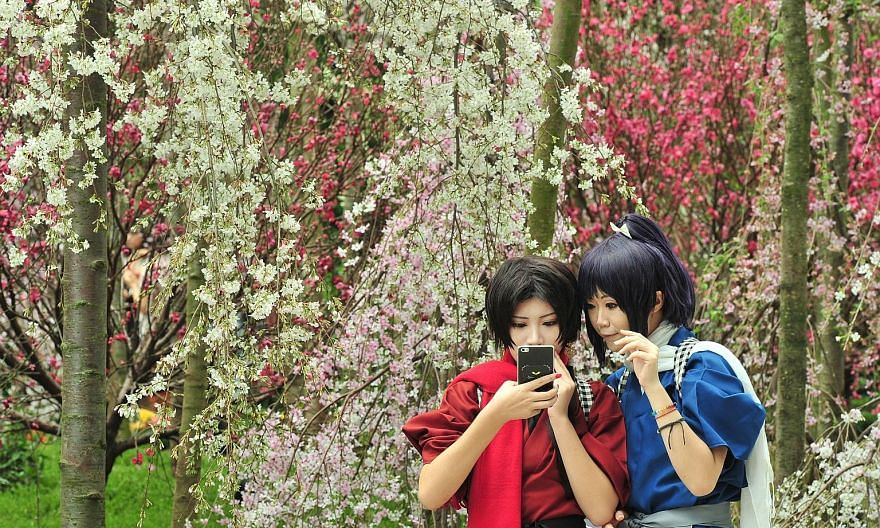 You might think that these women in Japanese-inspired outfits are sending greetings from a picturesque garden in the land of the rising sun, but it is right here in tropical Singapore. More than 20 varieties of cherry blossoms in different colours ar