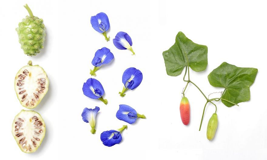 Food found in Punggol: (From left) The noni fruit, also known as the Indian mulberry; butterfly pea flowers; the ivy gourd, also known as baby watermelons.