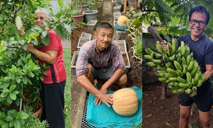 (From left) Retired educator Mahaya Menon, pastry chef Alex Ng and retired photographer Mohd Ishak in their home gardens.