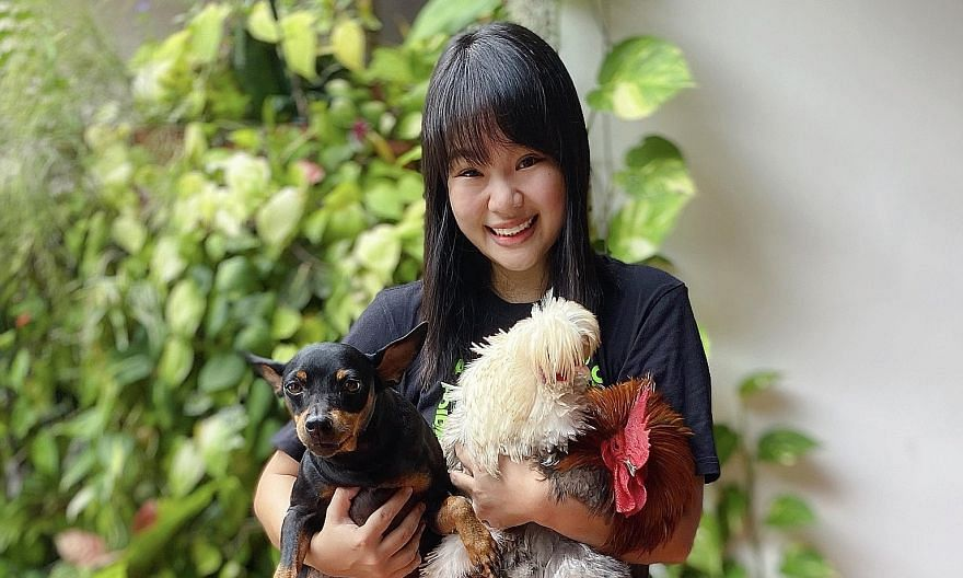 Business development manager Jayce Ho and her pets, including a dog and chickens. One of her chickens will repeatedly fly from his coop and perch on the fence, waiting to be hugged.