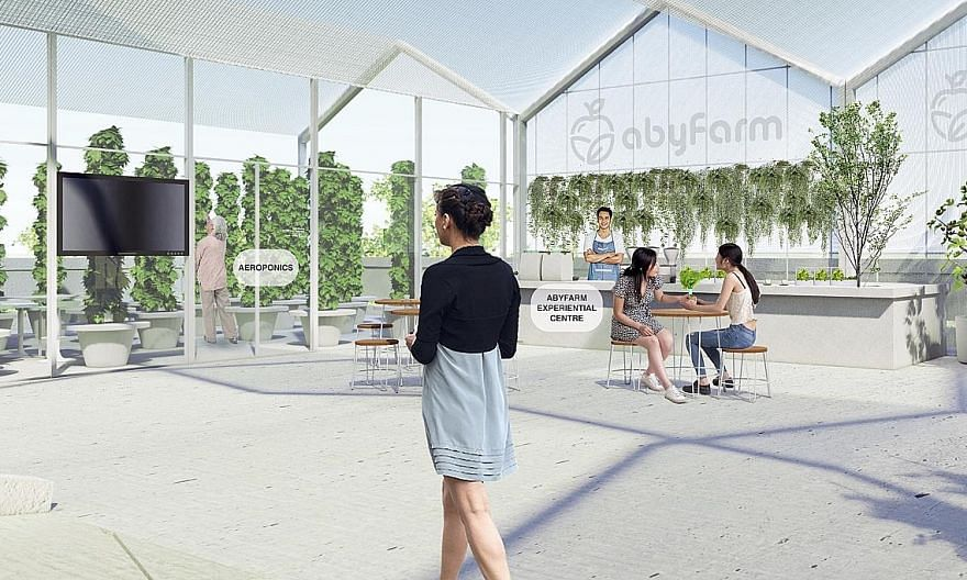 An artist's impression of AbyFarm, one of six successful tenderers for the HDB carpark rooftop spaces. AbyFarm hopes to begin construction on its site in Ang Mo Kio in the next few months, and have its launch date within the first half of next year.