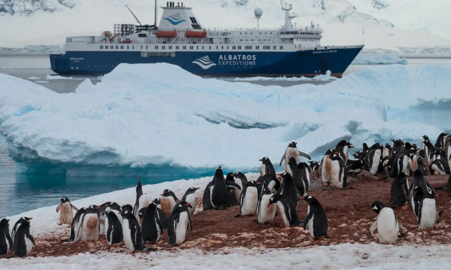 The Port Lockroy museum and post office, the southernmost post office in the world. Port Lockroy, a natural harbour off the Antarctic peninsula, is a nesting site for several colonies of gentoo penguins, a species whose range is expanding, most likel